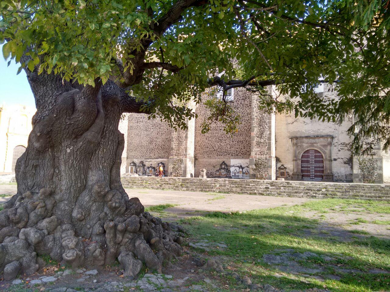 árboreo