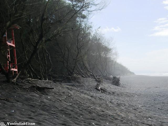 Pesisir Pantai Goa Cemara