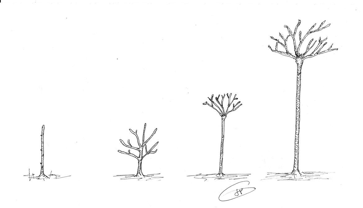 Comment tailler un fruitier cheap quand et comment tailler l abricotier conseils en images for - Comment planter un cerisier ...