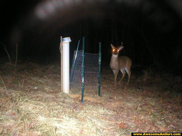 Build Deer Trap http://whitetailwoodsblog.blogspot.com/2013/02/how-to-make-shed-antler-trap.html