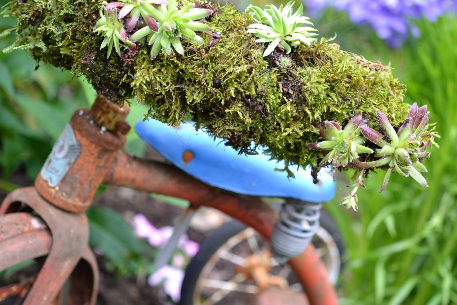 http://1.bp.blogspot.com/-OGTQnMj2y64/TgPCnsPpTEI/AAAAAAAADQQ/MfKhQ3vY3IQ/s1600/plants+005.JPG