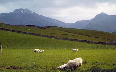 Škotska - Page 3 Skotska