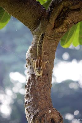 Squirrel, shashank, shashank mittal, shashank mittal photography