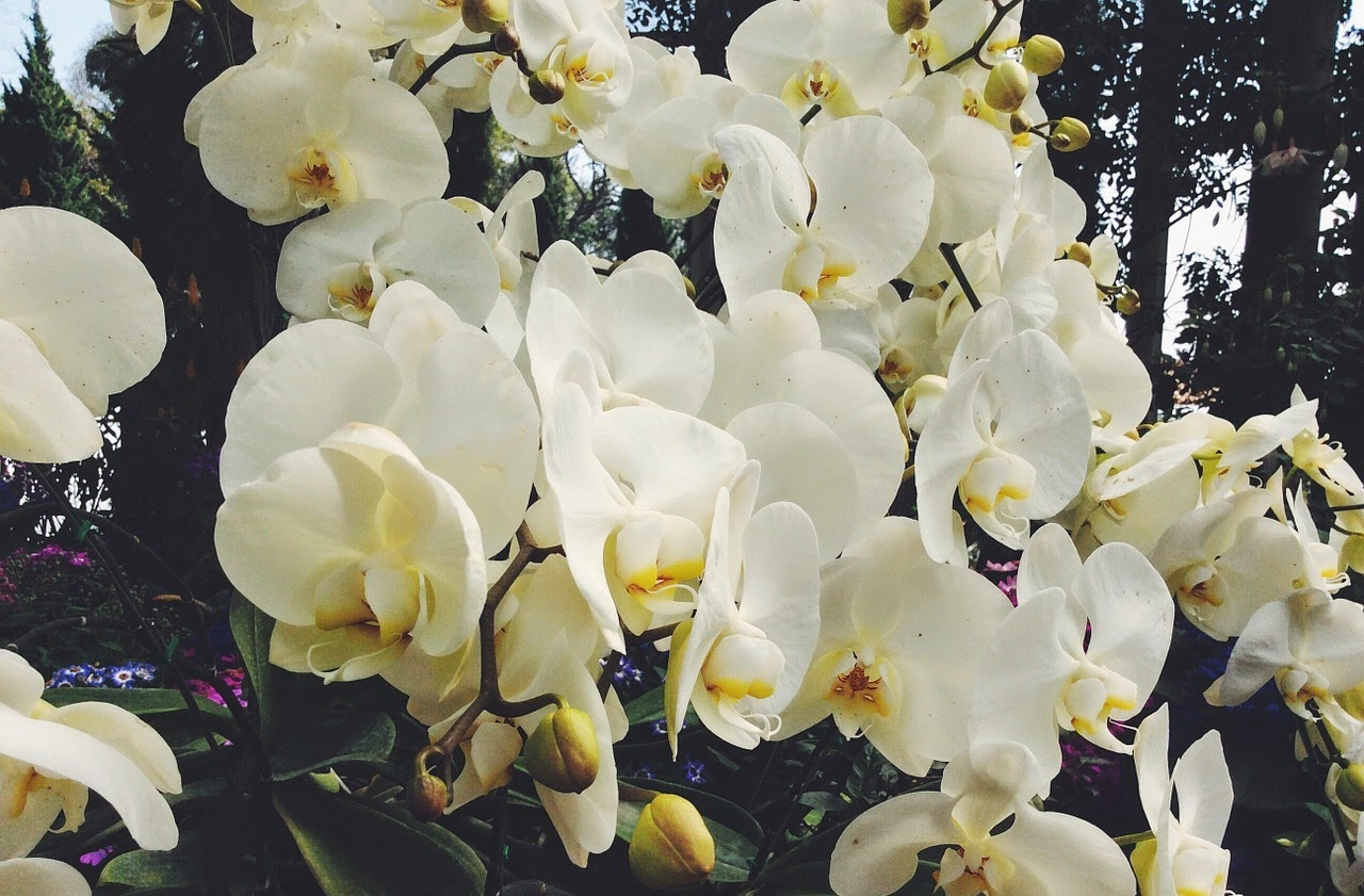 Thaiföld, orchidea, virágkiállítás, Magyar Mezőgazdasági Múzeum, orchidea-kiállítás, Magyar Orchidea Társaság