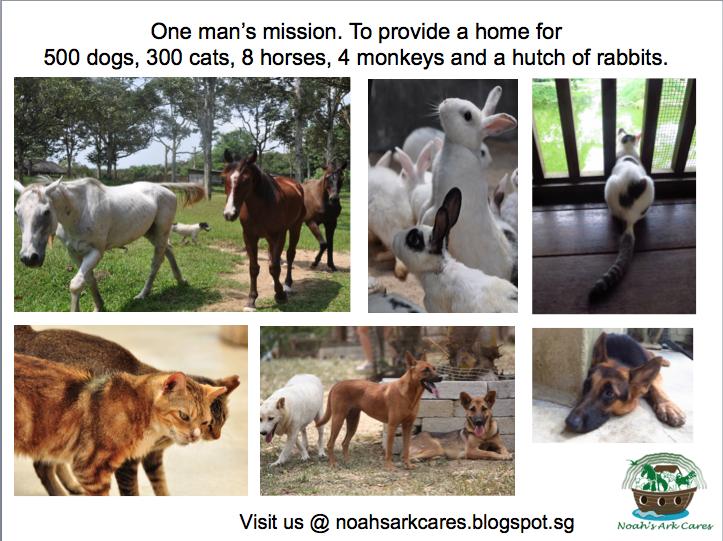 Noah's Ark CARES
