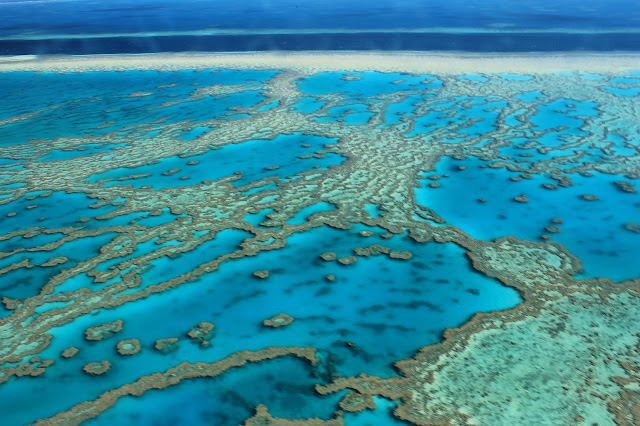 http://www.theguardian.com/environment/2015/aug/25/great-barrier-reef-climate-change-is-biggest-threat-to-native-species-study