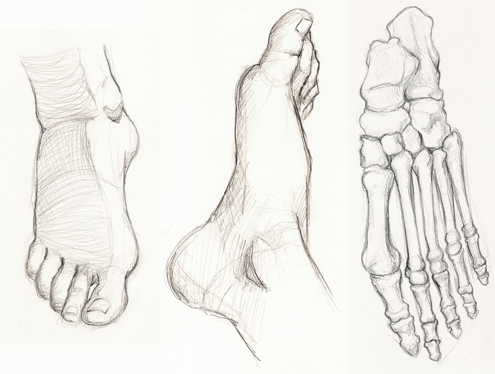 Figure Drawing and Anatomy: Foot Studies
