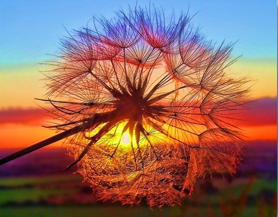 可愛圖片, 美圖分享 - 亮麗 - 亮麗的博客
