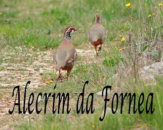 ALECRIM DA FORNEA