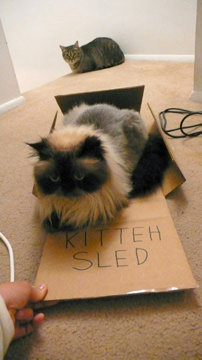 kitty sled