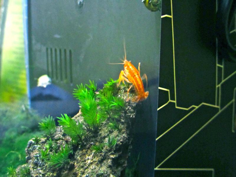 Aquascape: Nano Tank