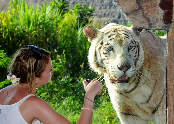 Key Exhibits - Bali safari and marine park