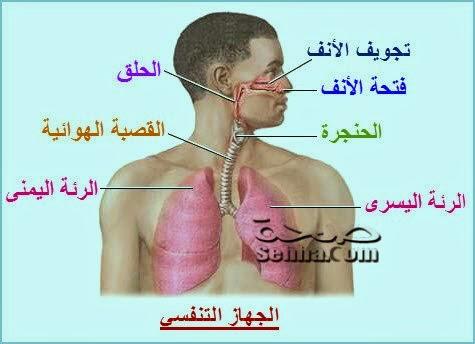 التنفس