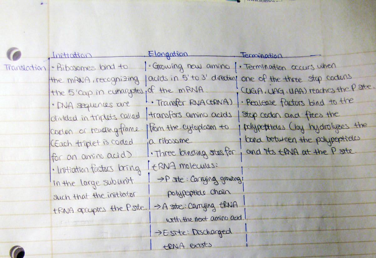 transcription translation compare contrast essay