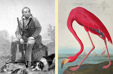 John James Audubon's Birds