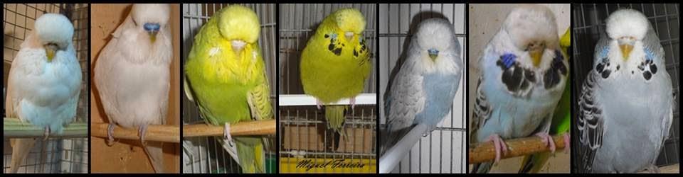 Aves Miguel Ferreira