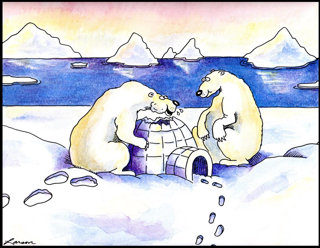 Fotógrafo captura enternecedoras imágenes de osos  - imagenes de animales polares