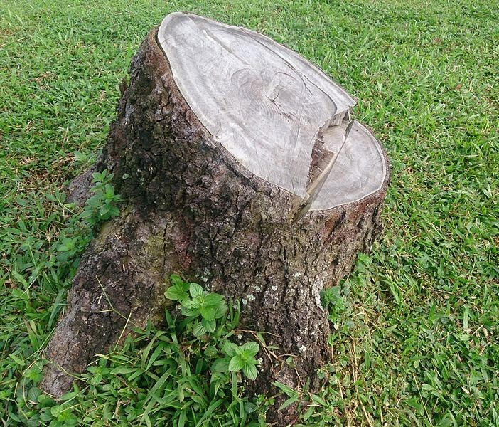 http://commons.wikimedia.org/wiki/File:Tree_stump_1.jpg