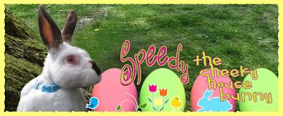 Speedy the cheeky house bunny