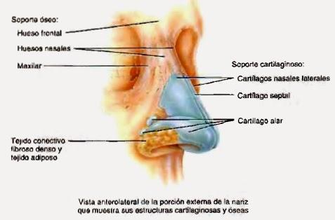 Anatomía de pulmón : septiembre 2015