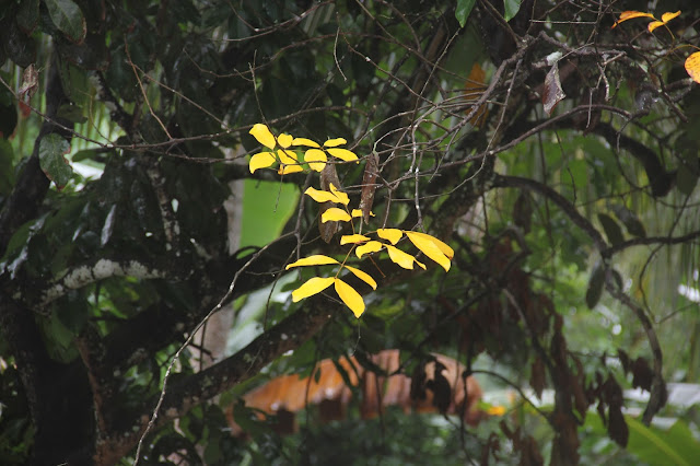 Ranting dan daun yang cantik