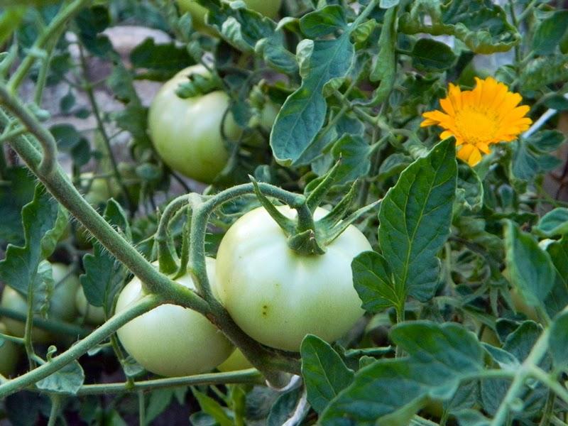 Producci n de alimentos biocasa for Produccion de plantas ornamentales
