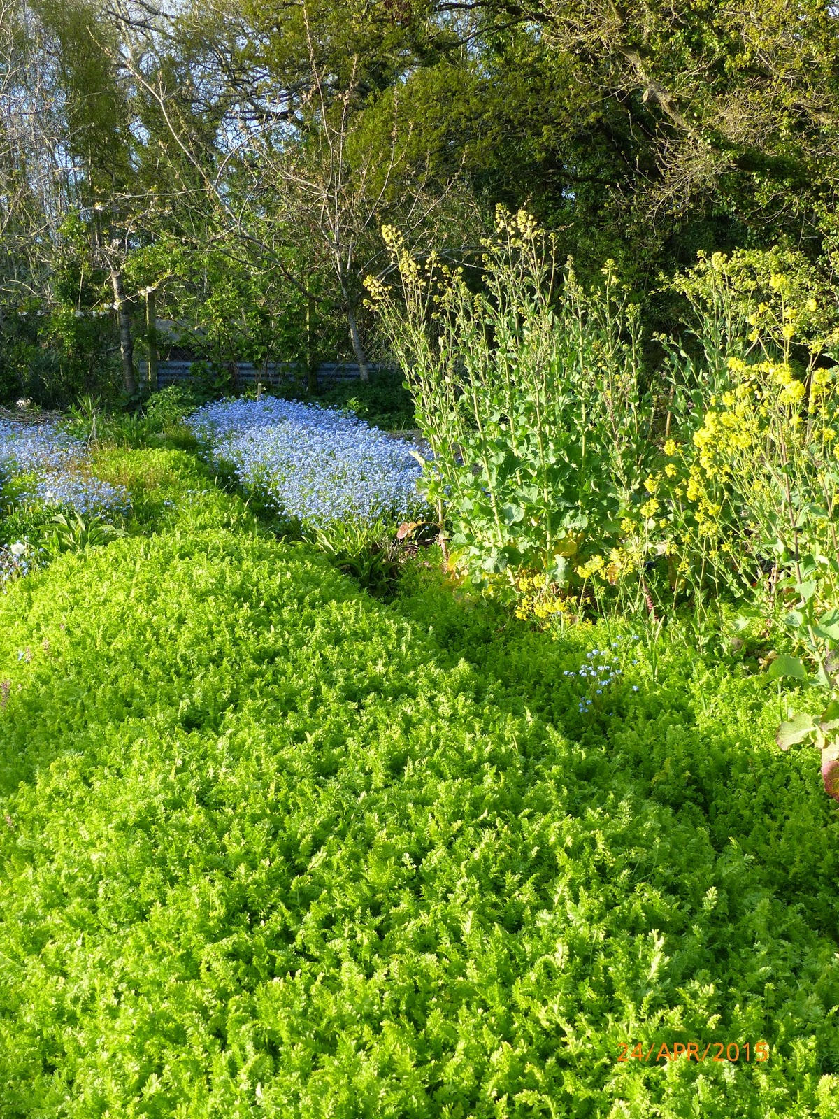 April vegetable garden - Vegetable garden what to plant in april ...