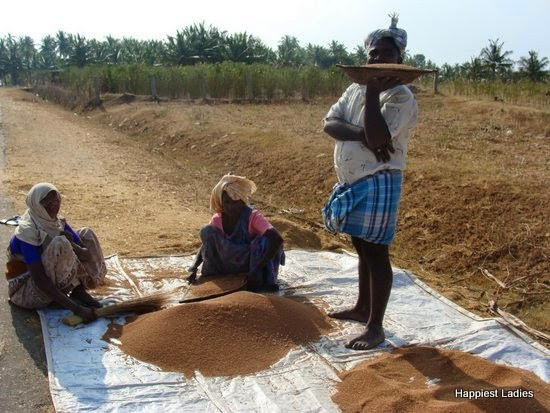 farmers with ragi crop