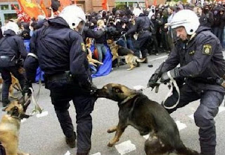funny picture of police: German shepherd biting policeman
