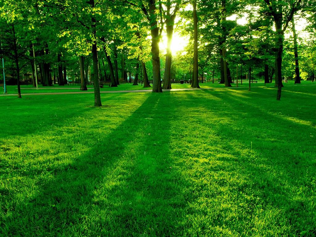La verde est muy buena por qu nos gusta lo verde for Jardin verde