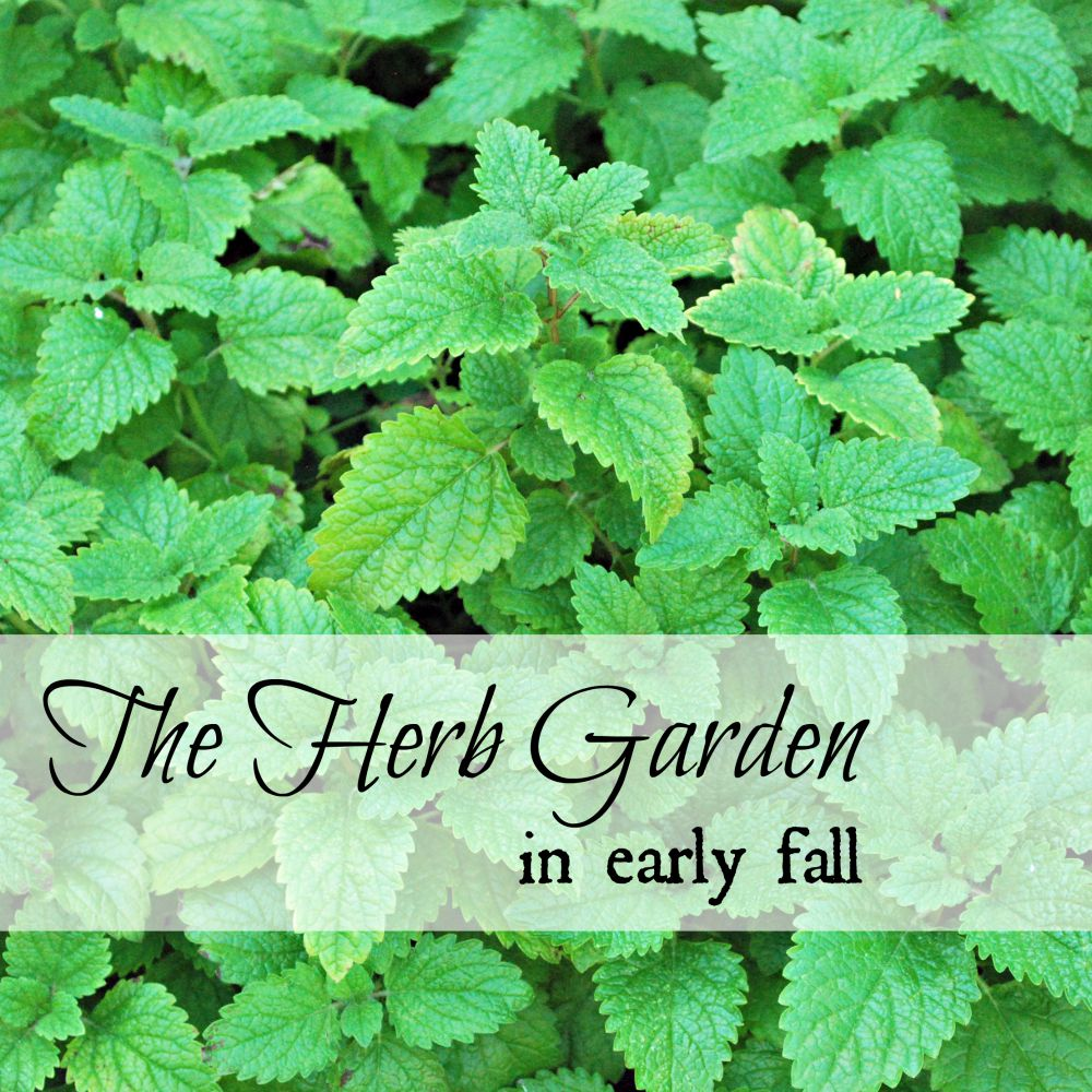 the herb garden in early fall oak hill homestead