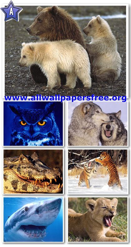 60 Amazing Wildlife Predators Wallpapers 1600 X 1200 [Set 4]