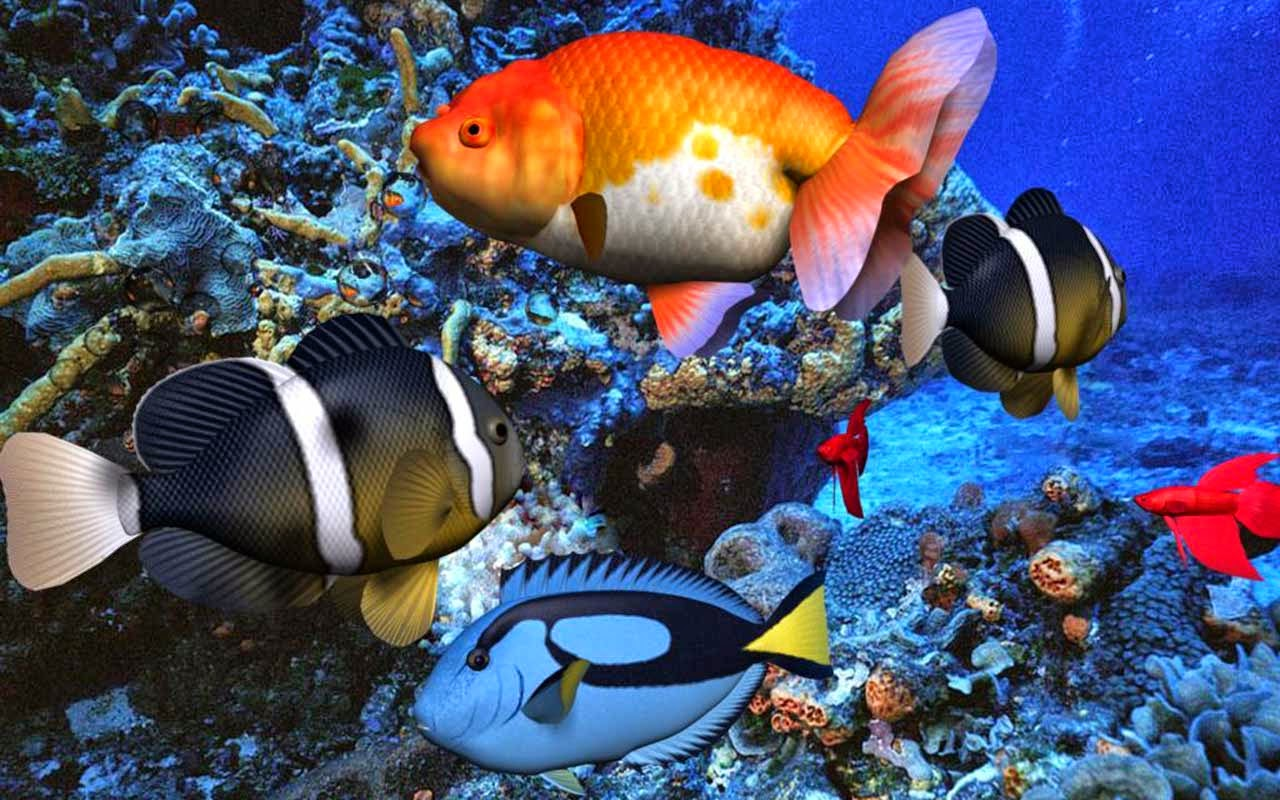 Banknotes And Coins Photos Colorful Fish Accessories