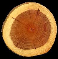 Древесина как строительный материал