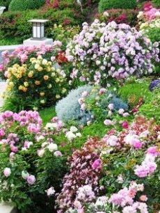 montana flores