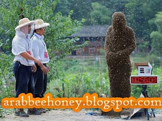 بالصور مسابقة النحل في الصين