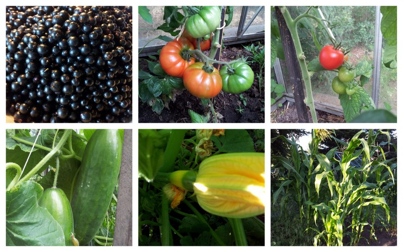 Pictures from the vegetable and fruit garden i wonder for Fruit and vegetable garden