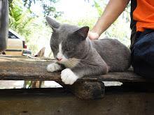 my cutie cat ... LABU