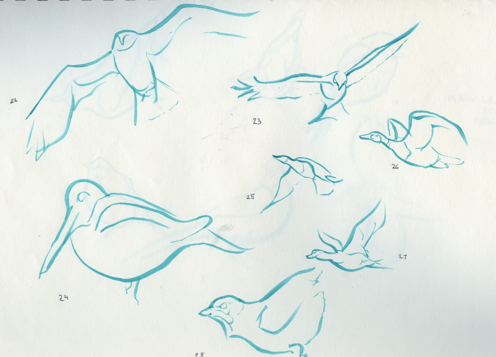 Line Art Of Birds : The autistic naturalist how to draw wading birds