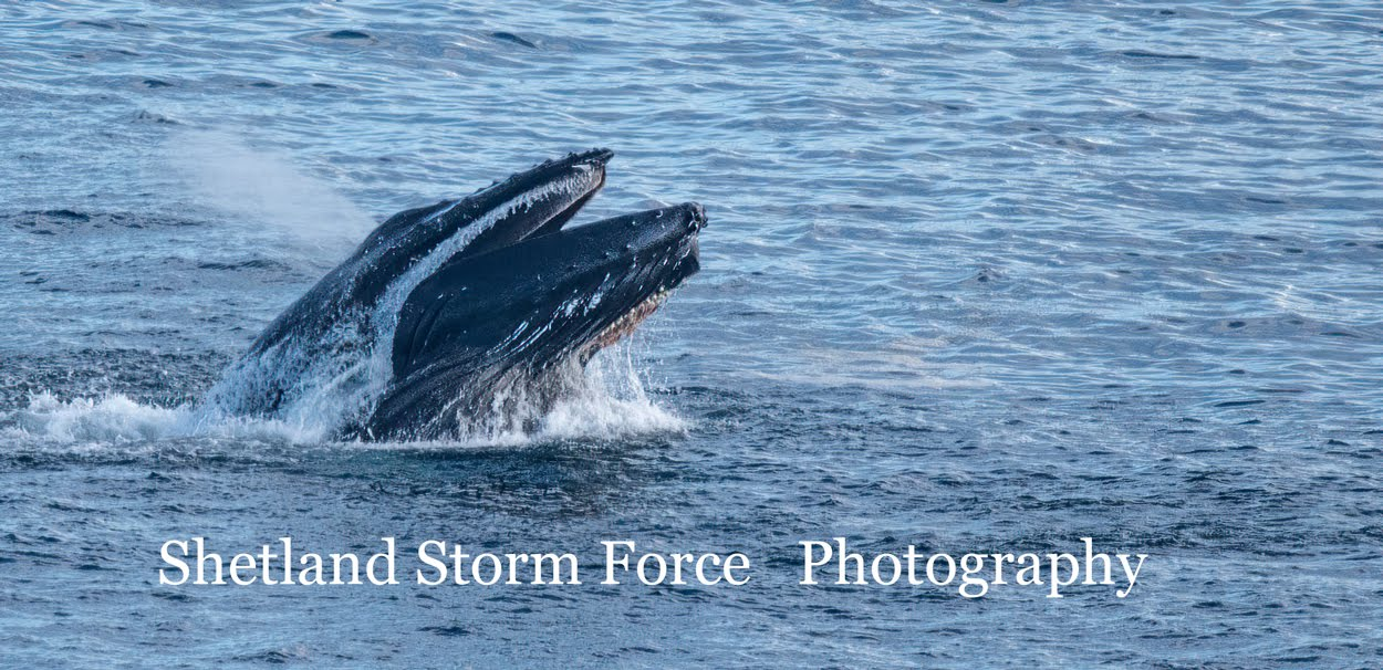 Shetland Storm Force Photography