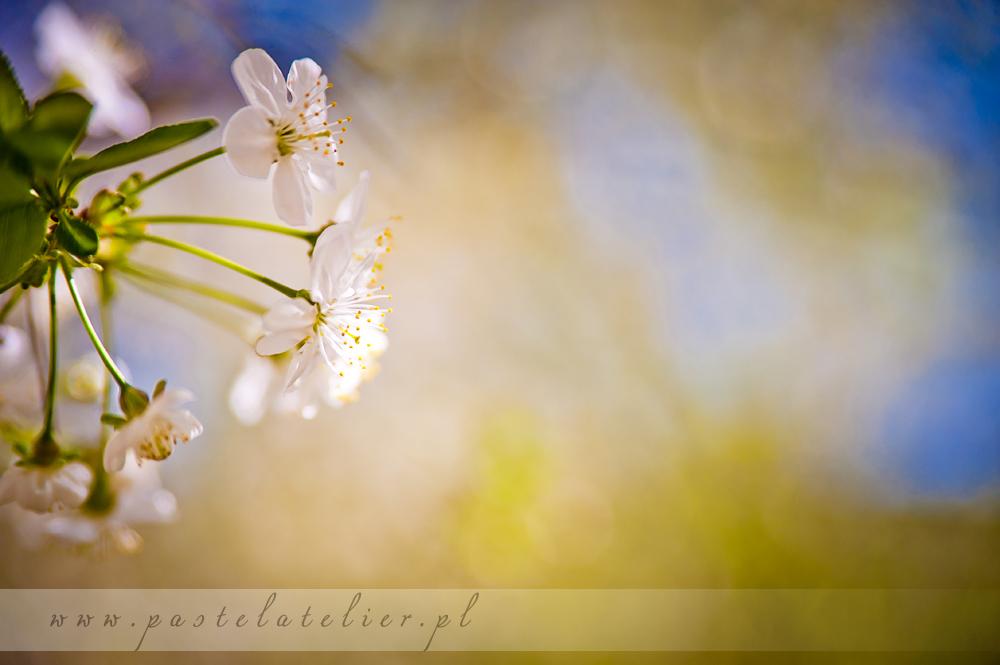 kwitnące kwiaty na Saskiej Kępie