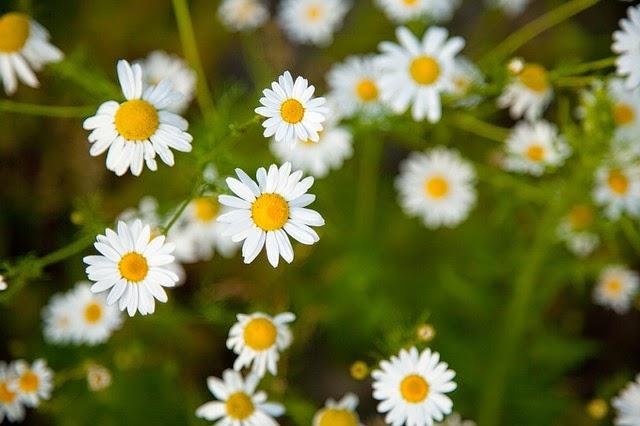 Analgésicos Naturais: saiba onde atuam alguns analgésicos naturais