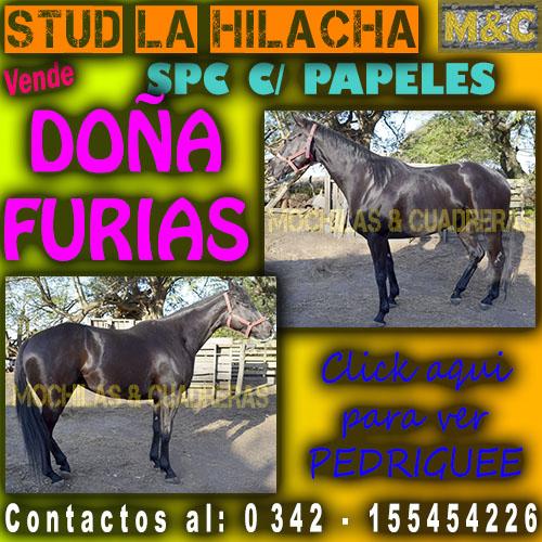 SLH - DOÑA FURIA