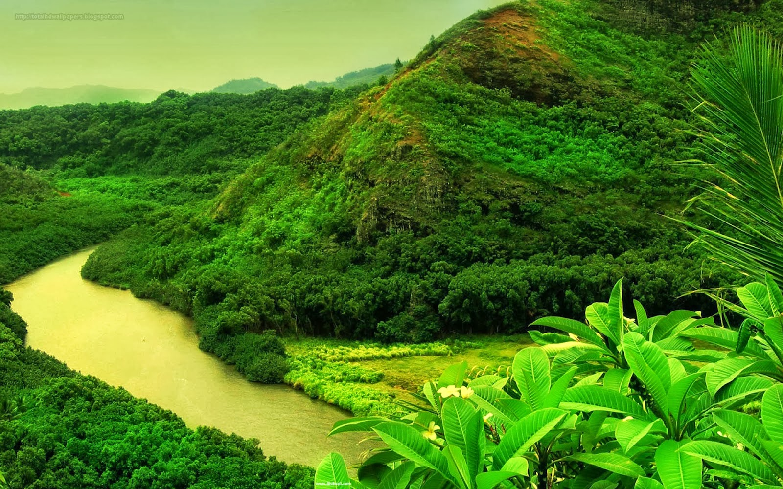 Most Beautiful Green Nature Widescreen HD Desktop Backgrounds Images Wallpapers