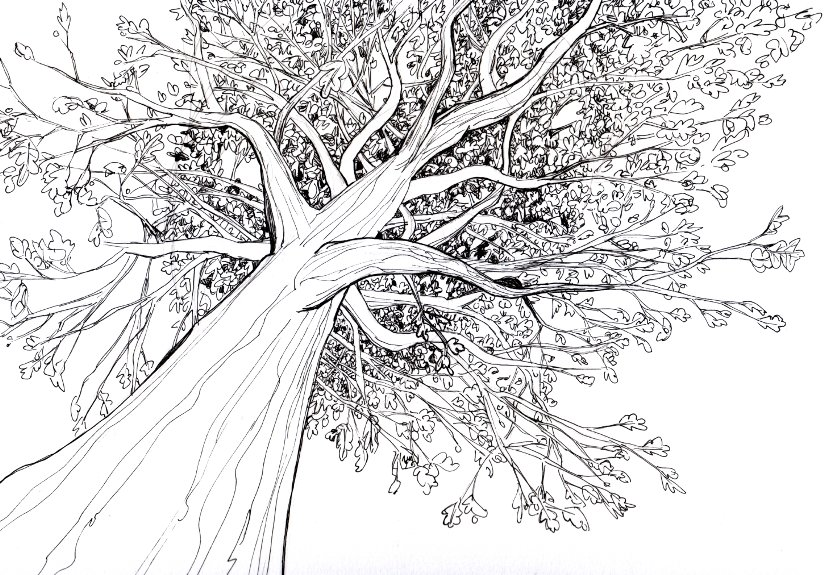 tree drawing 3d drawing