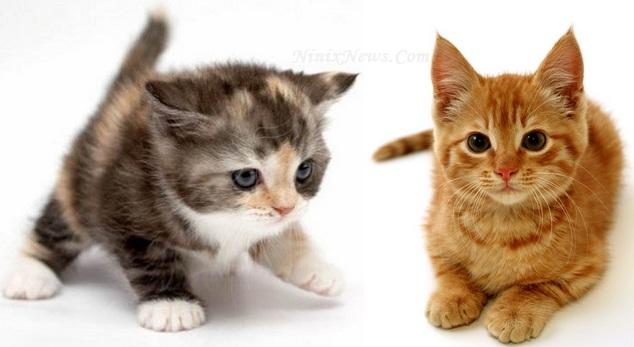 Rahasia Hewan Kucing