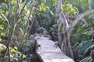 potensi hutan mangrove