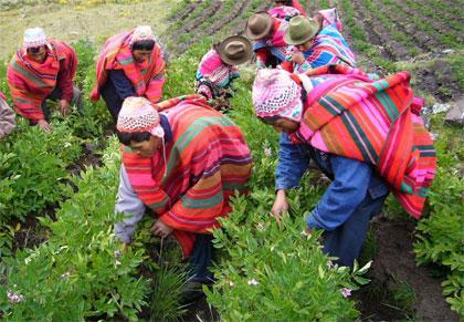 Foto de campesinos de la sierra en pleno trabajo