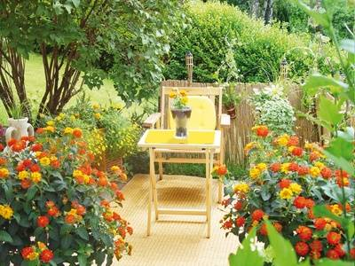 Design outdoor dining room in the home garden for couples