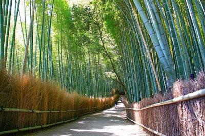 hutan bambu sagano8